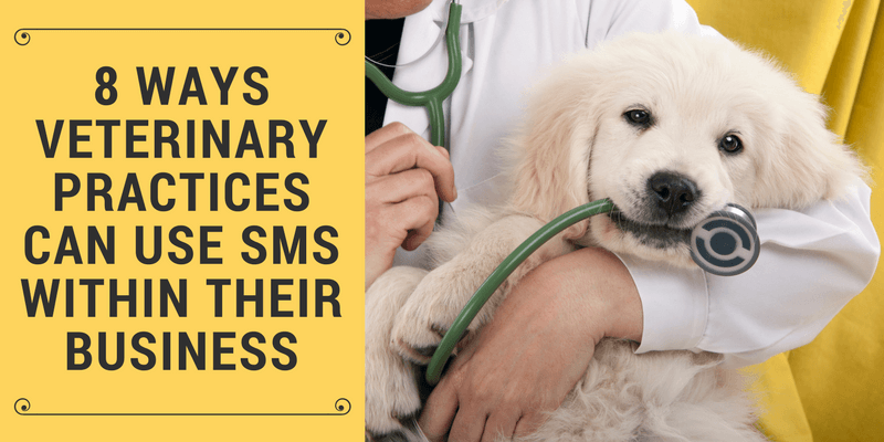 text messaging for veterinary practices
